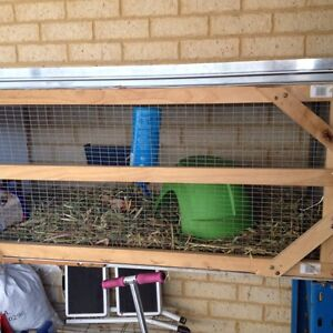 Guinea pig and hutch Darling Downs Serpentine Area Preview
