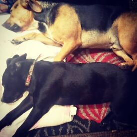 dogs need a good home