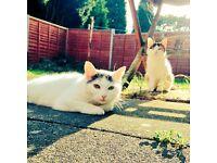 2 tortoiseshell cats