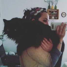 Young Professional and her Awesome Cat