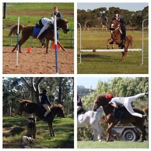 Australian Riding Pony For Sale Toongabbie Latrobe Valley Preview