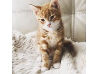 Adorable Kitten ready for a new home