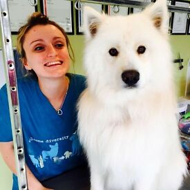 Hello Pets Professional Dog Grooming • All Breeds • Most Reviewed Torbay • C&G Qualified • Paignton