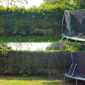 🌳 Lawn Mowing - Grass cutting - Garden maintenance , Tidy up, Gardening services - Local gardener