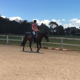 Lease or Free to GREAT home horse wanted
