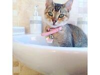 Kitten for sale, please read description.