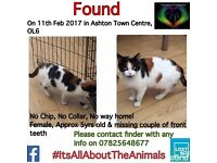 Black, white and ginger female cat found in Ashton Under Lyne on 11th Feb