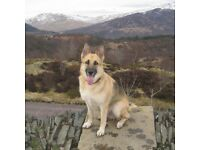 ADVENTURE TAILS DOG WALKER & PET VISIT SERVICES ! OFFERS AVAILABLE !