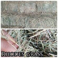 Delivering great quality Rhodes hay this Thursday Jimboomba Logan Area Preview