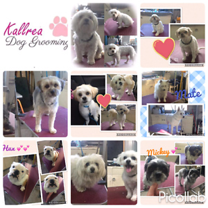 Kallrea Dog Grooming Dromedary Brighton Area Preview