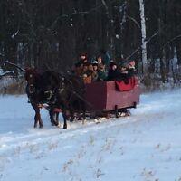 Tours de traineaux a chevaux.