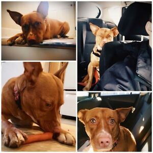 Available for adoption - nymeria