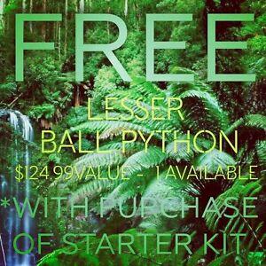 Free Reptiles*