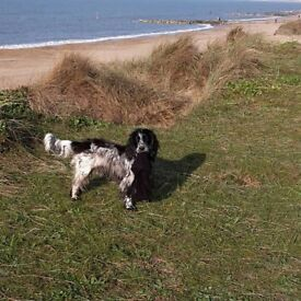 Dog Walker - Reliable and Caring lady with a passion for dogs. DBS checked.