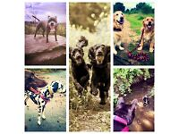 Dog walker. Mosborough, Ridgeway, Gleadless, Owlthorpe, Halfway, Frechville & surrounding townships