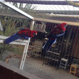 BIRDS BIRDS BIRDS Brisbane Region Preview