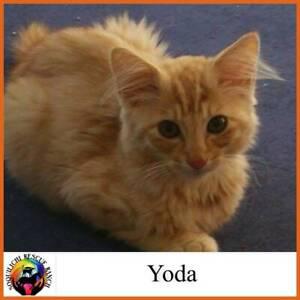 Yoda - Soquilichi Rescue