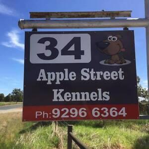 Apple Street Kennels Upper Swan Swan Area Preview