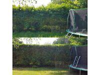 Garden maintenance-Lawn Mowing -Grass cutting -Garden Tidy up- Gardening services - Local gardener