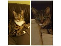 Missing 10 year old Tabby Cat. Very friendly. Last seen 10.30pm Thursday 16th February