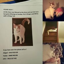 Lost Ginger Cat Applecross Melville Area Preview