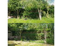 🌟 Lawn Mowing - Grass cutting - Garden maintenance , Tidy up, Gardening services - Local gardener