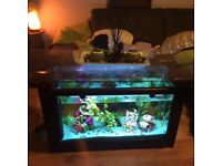 Fishtank coffe table