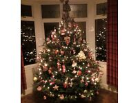 🌲🌲 CHRISTMAS TREES (REAL for sale)🌲🌲