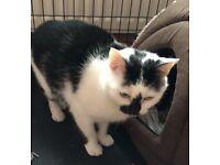 Beautiful Female Cat
