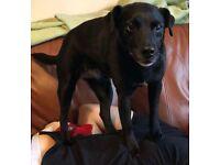 Lost dog- Hounslow Heath