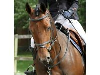 Horse schooling and lessons for sale