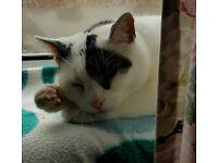 Missing cat Zuzia