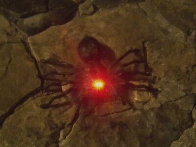 HALLOWEEN HANGING ANIMATED DROPPING DANGLING FURRY TARANTULA SPIDER FIGURE PROP (Animated Halloween Spider)