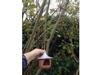 Unusual Garden ornament house hanging bird feeder candle holder teracota house
