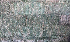 Lucerne small square bales Rochester Campaspe Area Preview