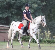 Leopard Palouse pony gelding 13.1hh, 6 yr old Greens Beach West Tamar Preview