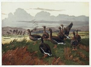 WINIFRED AUSTEN Vintage Rare c1930's  Aquatint Etching WILD GEESE IN THE MARSHES