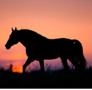 Horse Wanted! Noggerup Donnybrook Area Preview