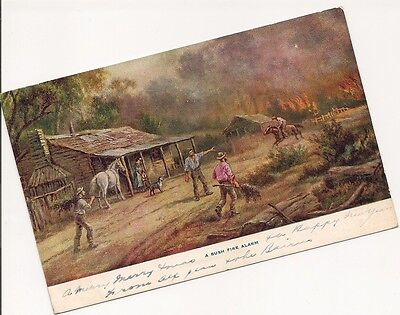 Old Postcard-A BUSH FIRE ALARM-Old Postcard