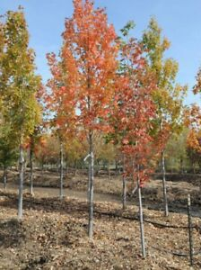 **Fall sale**Trees , Shrubs, Planting, Landscaping
