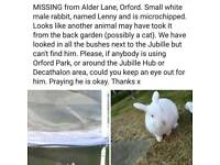 URGENT MISSING ALDERLANE RABBIT