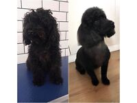 BARK&BATH DOG GROOMING (HOME BASED DOG GROOMING SALON)
