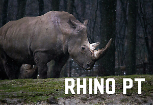 Rhino Personal Training Wellington Point Redland Area Preview