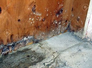 DO YOU HAVE MOLD OR WATER DAMAGE...DONT WAIT CALL US Edmonton Edmonton Area image 3