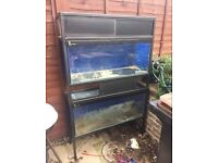2x Fish tanks and stacked stand (ex shop display) 3 foot tanks