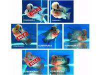 Grade AA Flowerhorn Cichlid | 5 inch £125 | 7 inch £195 | Freshwater Fish