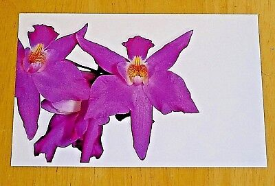 KEW ROYAL BOTANICAL GARDENS ~ ORCHID POSTCARD ~ HALLOWEEN ORCHID ~ FILS, 1888