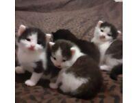 One kitten left