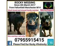 Missing ROCKY