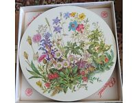 6 Pimpernel meadow flower round placemats.